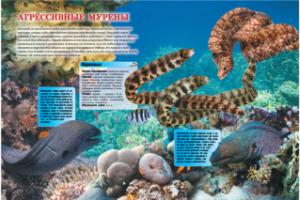 Красочные энциклопедии для детей с уникальным иллюстративным материалом